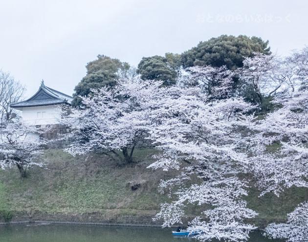 千鳥ヶ淵緑道の桜 皇居の建物と写すと風情がある