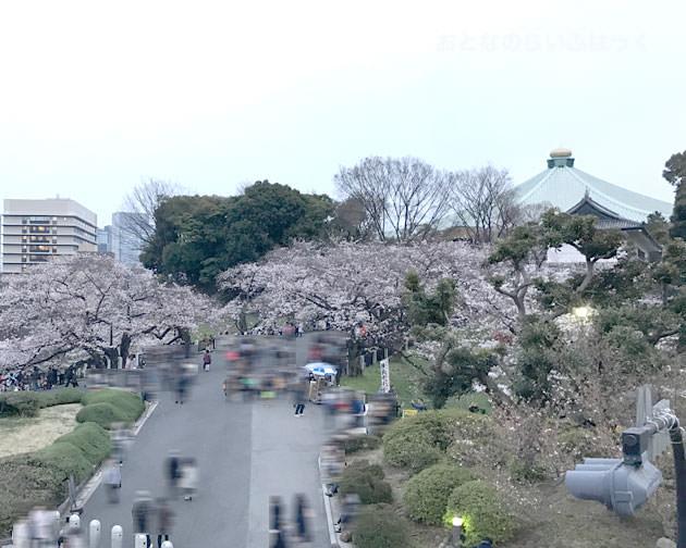 靖国神社へ歩道橋からみた千鳥ヶ淵の桜 武道館も見える