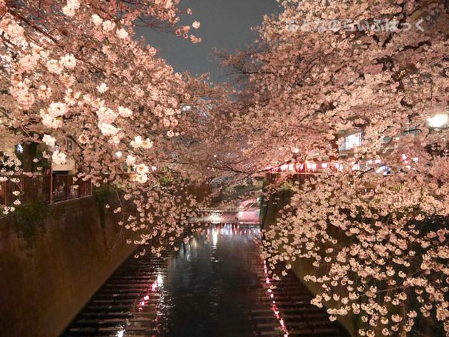 目黒川の桜 橋の上から撮影