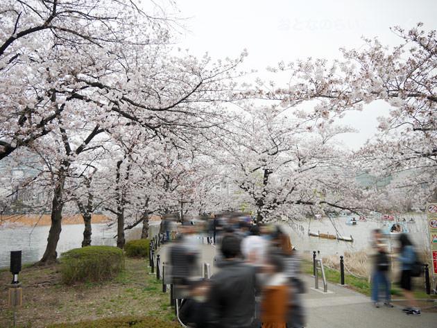 不忍池の池の桜 2