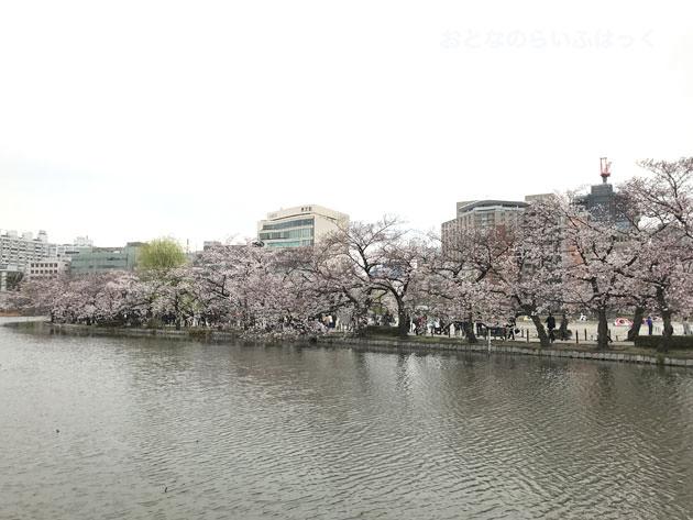 不忍池の中を桜並木が続いている