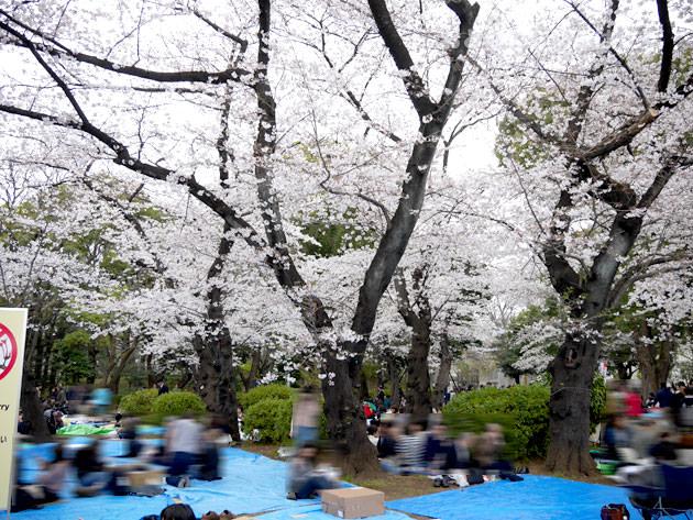 上野公園は花見の場所取りが多くて見た目は悪い