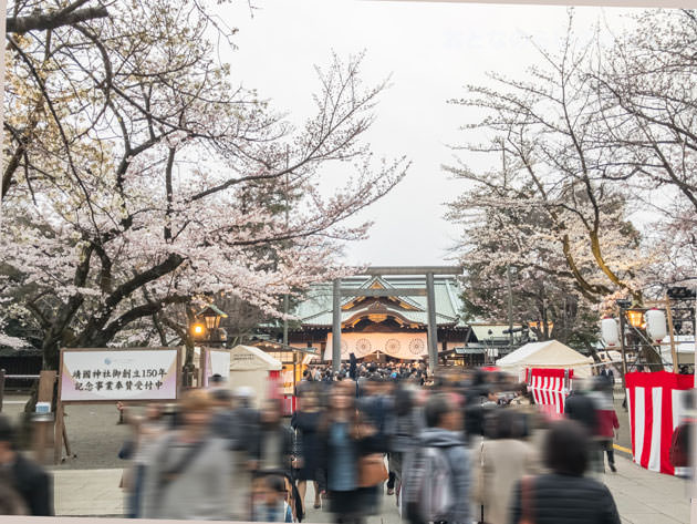 靖国神社 中門鳥居と拝殿と桜