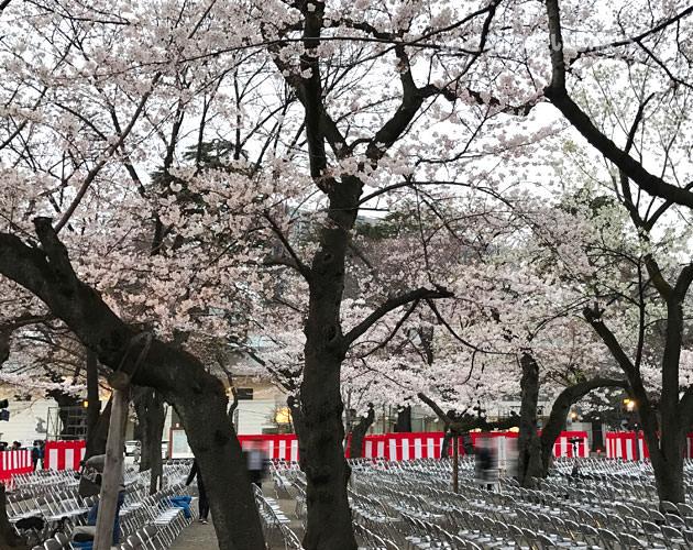 靖国神社の能楽堂のイベント 桜の下で見ることが出来る