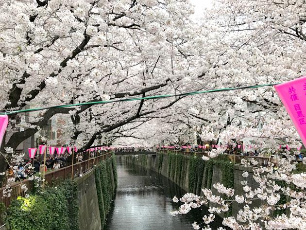 中目黒近辺は皮が細いので両側の桜をカメラに収めることができる