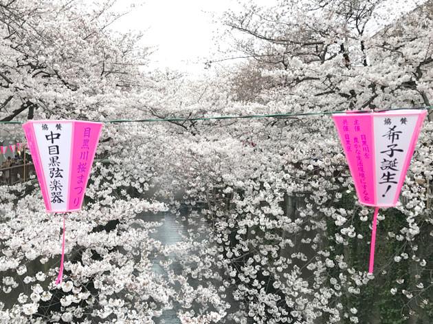 目黒川の桜と提灯