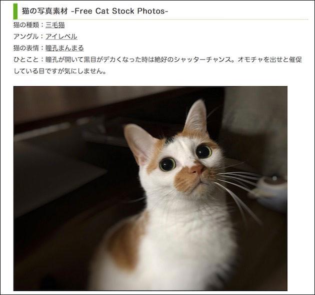 Cat Press ダウンロード画面