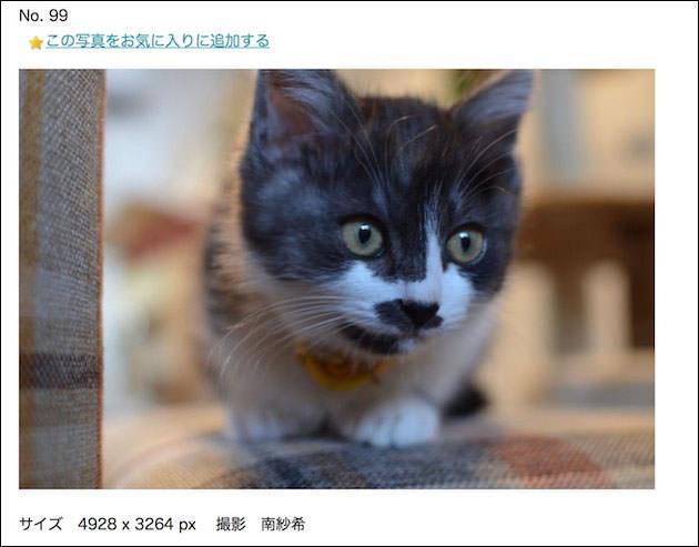 侍にゃぱん 写真部 ダウンロード画面