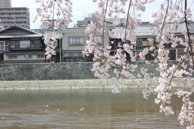 2020版:大阪 京都 兵庫の花見ができるレストラン!ランチ・ディナー情報、桜が見える席確約プランあり