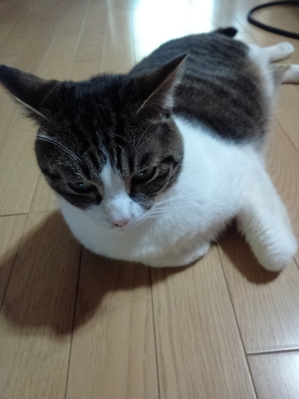 f:id:yosiokakanon3:20190524174414j:plain