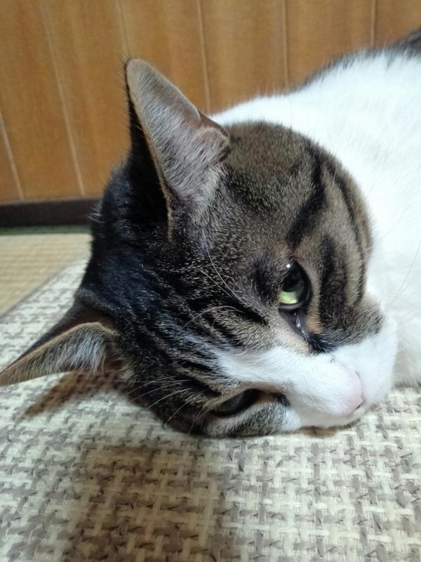f:id:yosiokakanon3:20210110210350j:plain