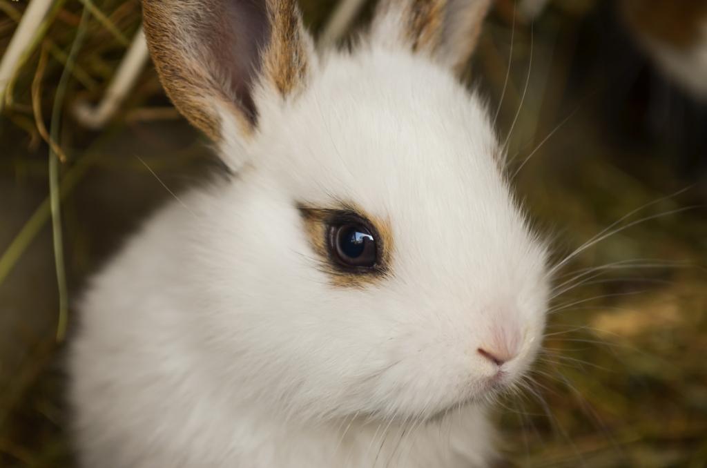 文字通り 歌い継がれる 名曲 the pillows funny bunny カバー集 now