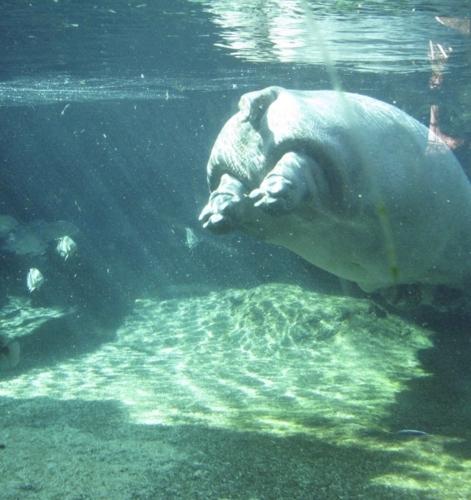 天王寺動物園 カバ舎