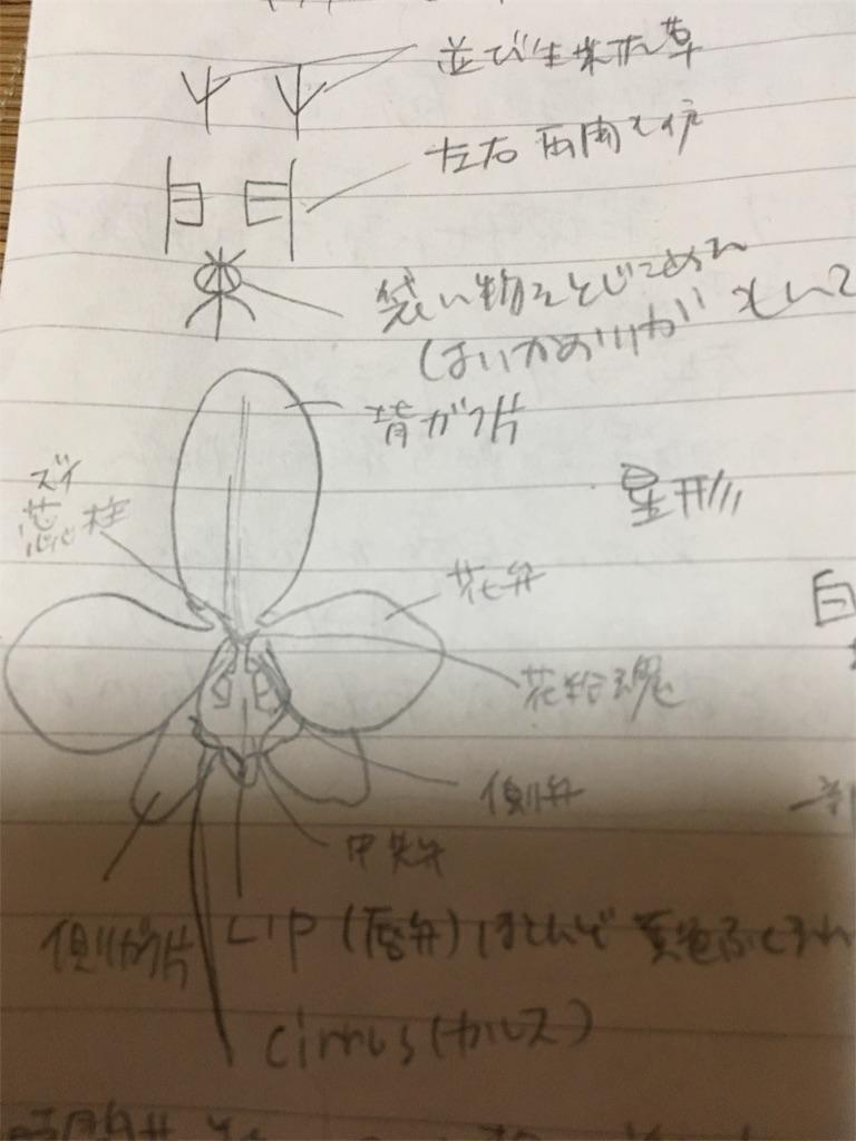 f:id:yosweet_0907:20170929140304j:image