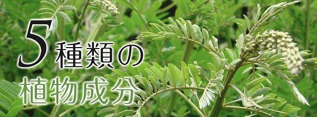 5種類の植物成分