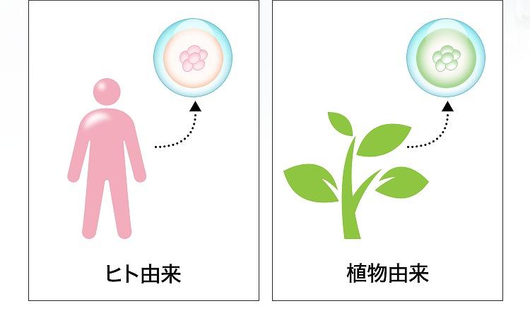 ヒトにはヒトの幹細胞