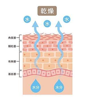 肌が乾燥する仕組み