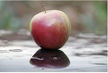 リンゴ果実細胞培養エキス