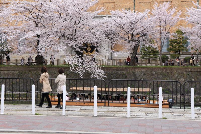 『京都新聞写真コンテスト 春を愛する人たち』