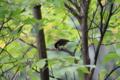 樹海の野鳥