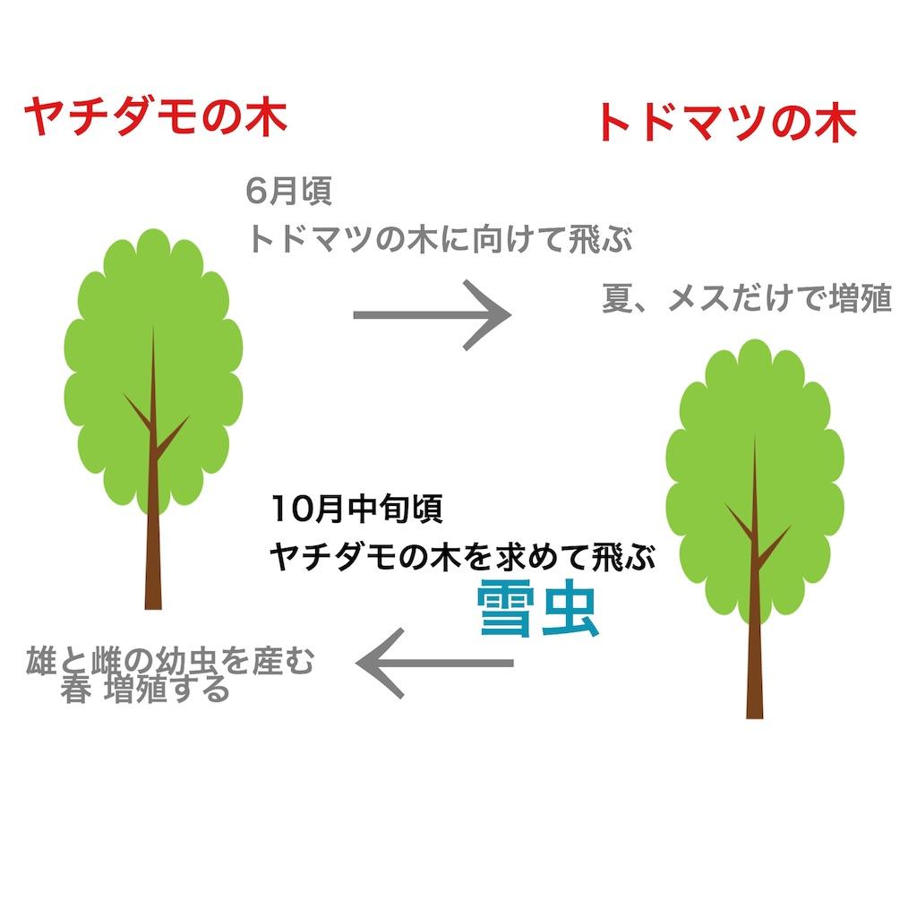 f:id:yotsuba0229:20191008210204j:plain