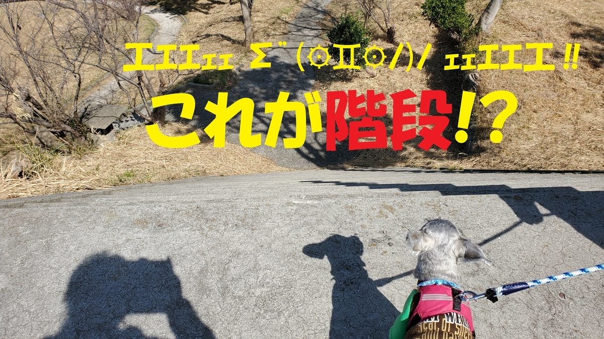 f:id:yotuba2014:20210310003400j:plain