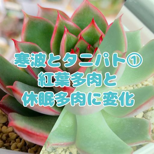 f:id:you-pon:20210104205304p:plain