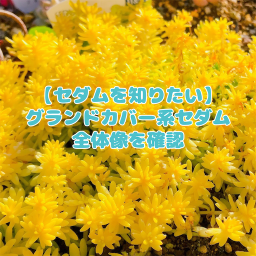 f:id:you-pon:20210426002650p:plain