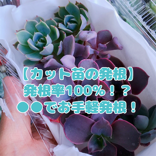 f:id:you-pon:20210511214211p:plain