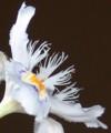 [花][しゃが]しゃが