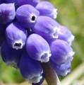 [花][むすかり]むすかり