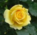 [花][ばら]ばら