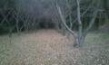 きれいな 栗林(冬)
