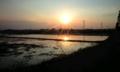 光レンコン畑