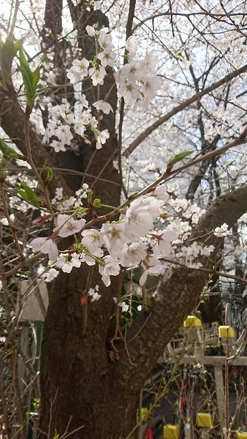 f:id:yousugitani:20180324132902j:image