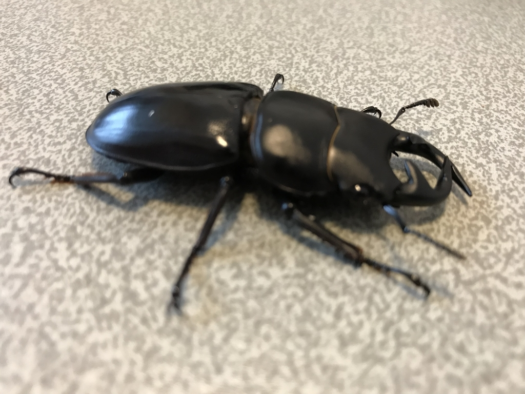 f:id:youwanna-beetles:20180929191050j:plain