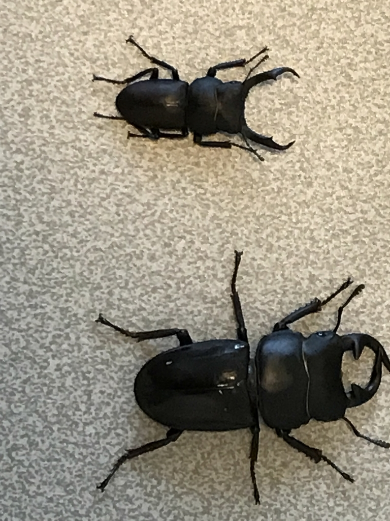 f:id:youwanna-beetles:20180929191337j:plain