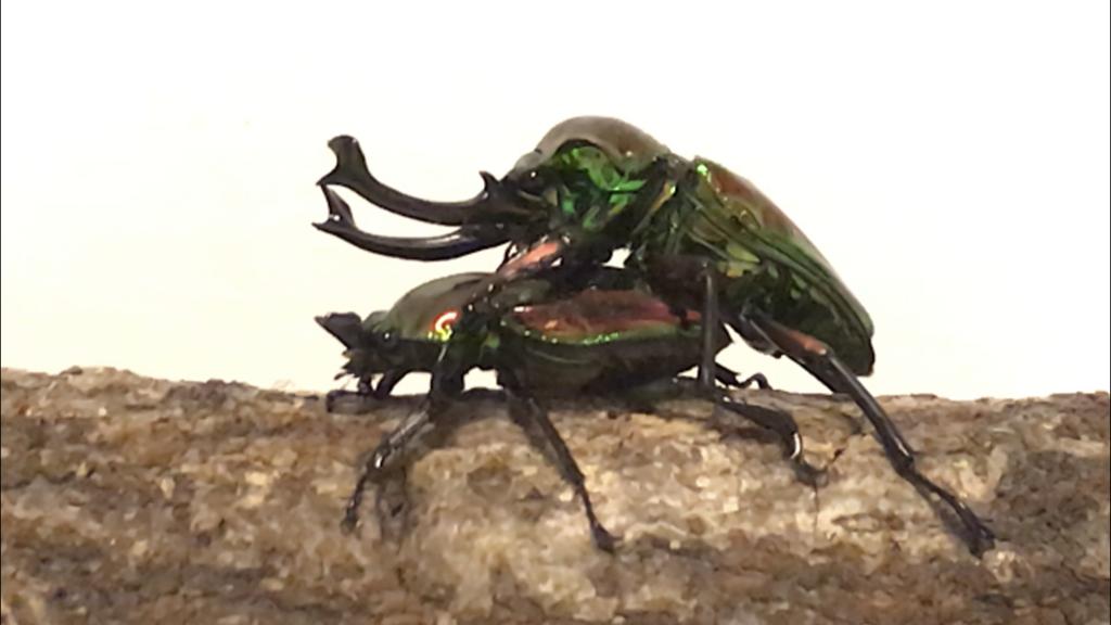 f:id:youwanna-beetles:20181101220821p:plain