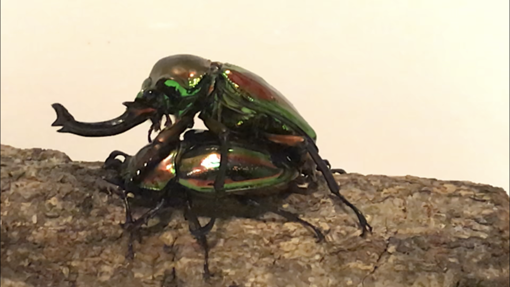 f:id:youwanna-beetles:20181101221536p:plain