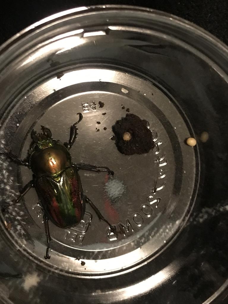 f:id:youwanna-beetles:20181228204153j:plain