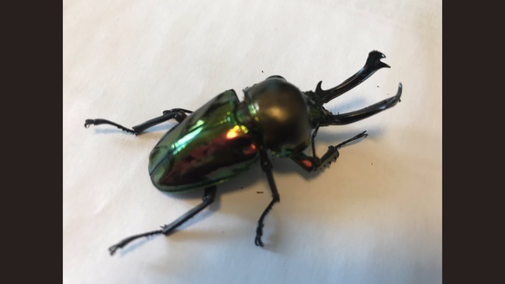 f:id:youwanna-beetles:20190204233350p:plain
