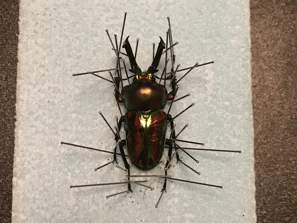 f:id:youwanna-beetles:20190205002412j:plain