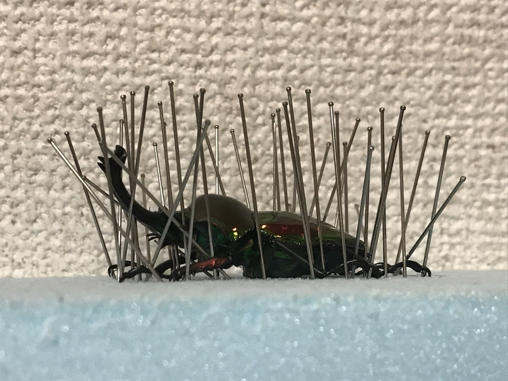 f:id:youwanna-beetles:20190205010157j:plain