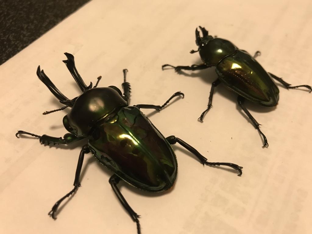 f:id:youwanna-beetles:20190310170029j:plain