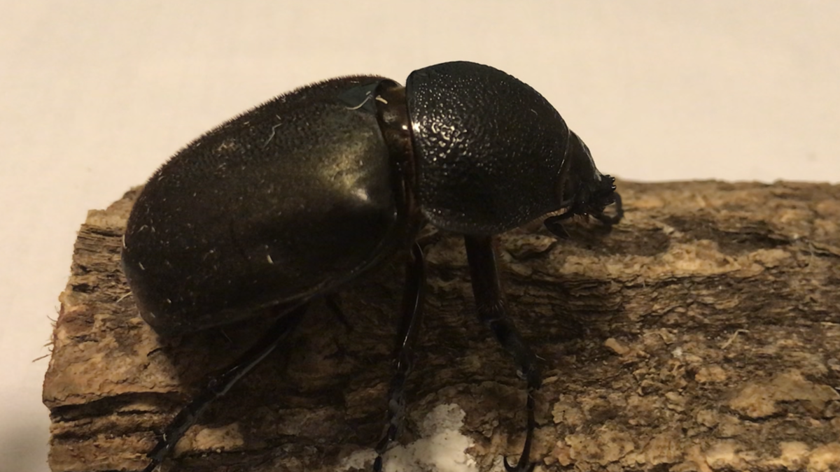 f:id:youwanna-beetles:20190417120612p:plain