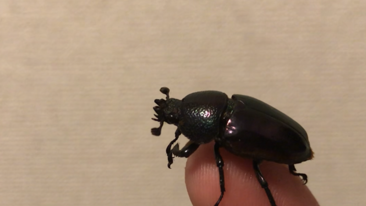f:id:youwanna-beetles:20190429232211p:plain
