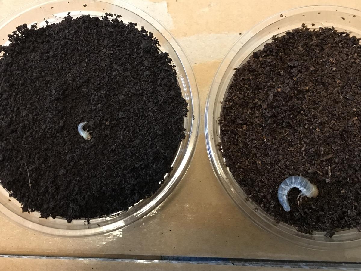 f:id:youwanna-beetles:20190502011947j:plain