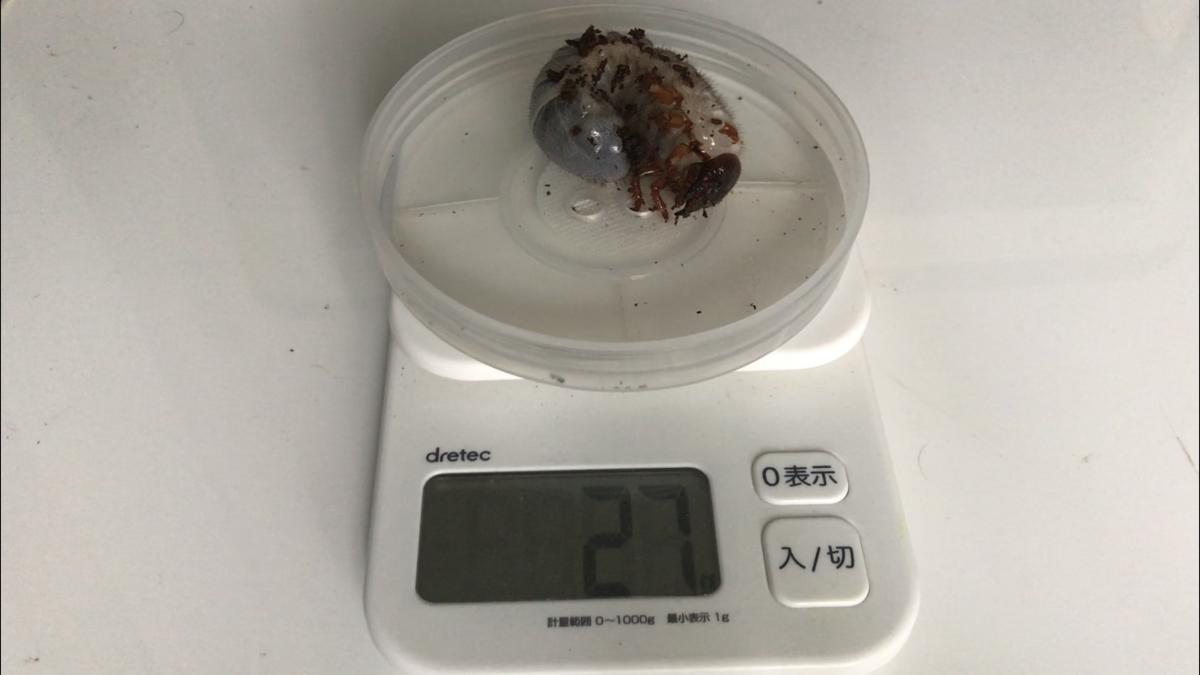 f:id:youwanna-beetles:20190509140134p:plain