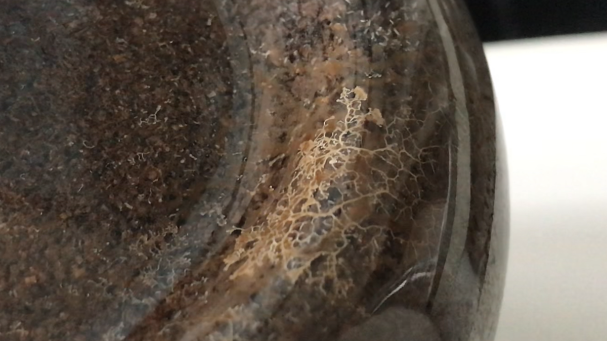 f:id:youwanna-beetles:20190509140215p:plain