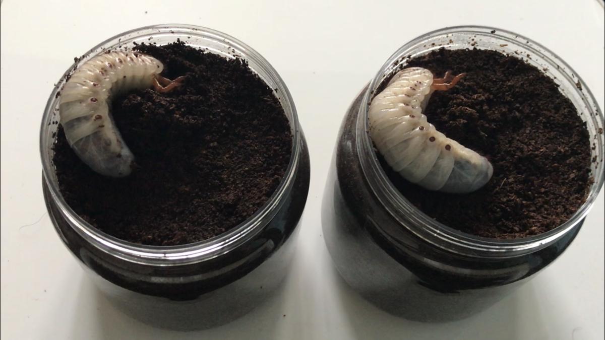 f:id:youwanna-beetles:20190510142704p:plain